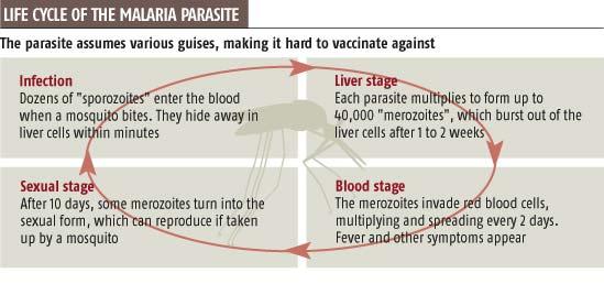 New lead in hunt for malaria vaccine