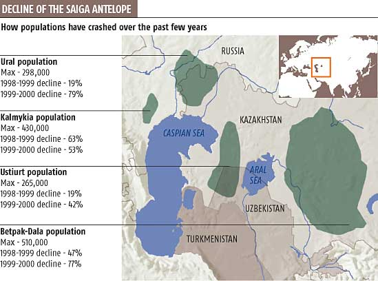 Decline of the saiga antelope