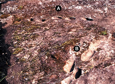 The trails of footprints (A and B) have as many as 27 steps