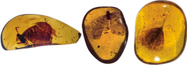 The gems are probably the best-preserved fossils of any butterfly