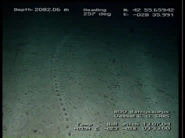 A puzzling set of tracks, resembling burrows were found at a depth of 2000 metres