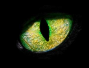 Eyes, like this panther eye, are one of evolution's most astonishing creations