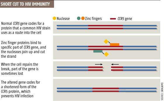 Short cut to HIV immunity