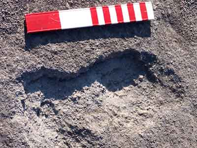 Hundreds of human and animal footprints were preserved in a layer of ash from a nearby volcano
