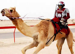 The camel-riding robots are controlled remotely