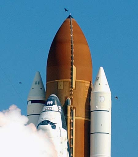 The nose cone of the orange external tank struck the large bird just 2.5 seconds after launch