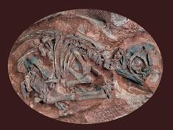 Analysis of the embryonic skeleton of the Massospondylus reveals that it crawled on four legs