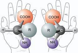 Amino acids are molecules that come in mirror-image right- and left-handed forms