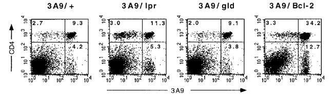 Graphs in Figure 1 of a paper in the journal Immunity (vol 8, p 265) are captioned as representing data from cells taken from three different mice, yet the data points, especially the outliers, are uncannily similar
