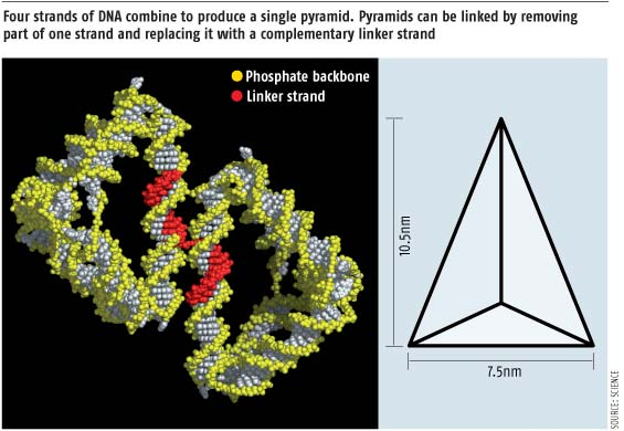 The double helix becomes a pyramid