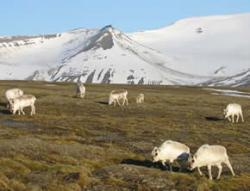 Midnight in June is a sunny affair in Svalbard