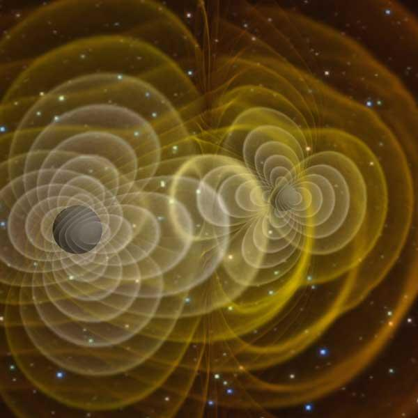 Black holes distort space-time (yellow lines) and emit gravitational waves as they spiral towards each other