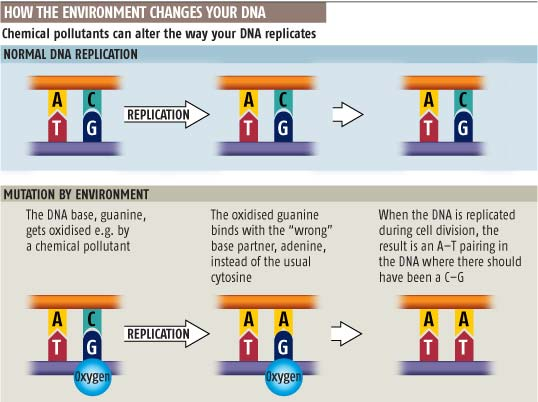 How the environment changes your DNA