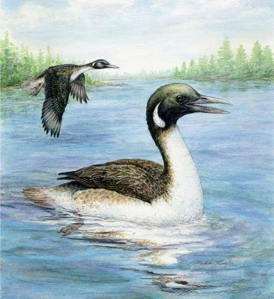 The amphibious bird Gansus yumenensis lived in a lake in what is now northwestern China about 110 million years ago
