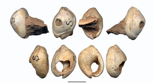 Each shell found at Skhul had a hole on the back, most likely made by humans, though such holes do occur naturally. Both shells are pictured in four views. Scale bar is 1 centimetre