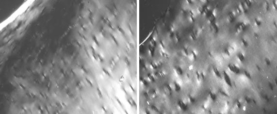 Polarised microscope images (magnified 10 times) reveal that tissue-engineered cartilage (right) is similar to natural cartilage (left)