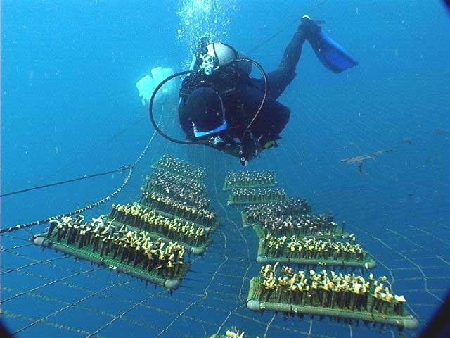 Intensive care heals damaged coral reefs