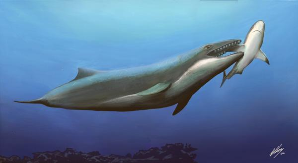 This ancient predator shows no sign of the gentle filter-feeding of its modern day relatives (Artist's impression: Erich Fitzgerald/Monash University)