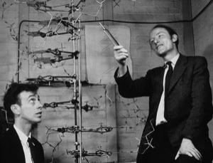 The discoverers of the structure of DNA. James Watson (b. 1928), left, and Francis Crick (1916-2004), with their model of part of a DNA molecule in 1953