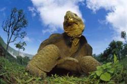 Trouble in Darwin's paradise