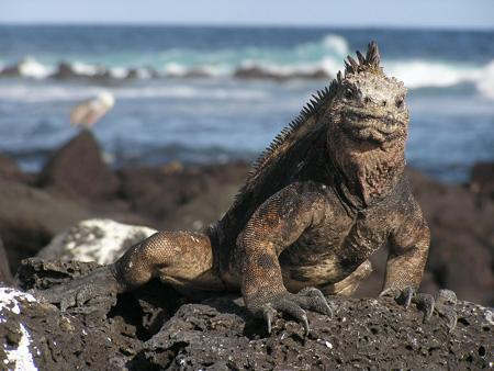 Up close and personal – the iguanas have ruled the 'roost' for so long, they have forgotten what it is to fear