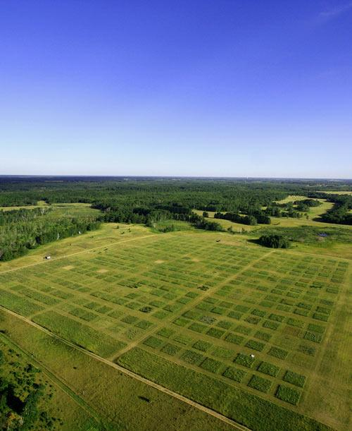 The Minnesota experiment contains numerous plots planted with combinations of up to 16 grass species. Each plot is 9 metres by 9 metres in area