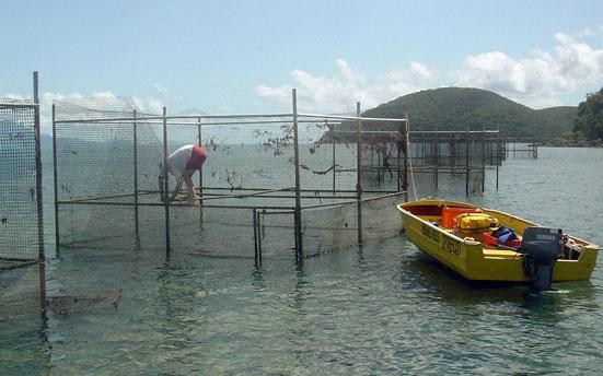 The mesh on the cages reached above the surface to prevent any fish from getting into the test areas