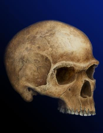 The resemblance of the South African skull to European finds suggests early humans arrived relatively late in Europe