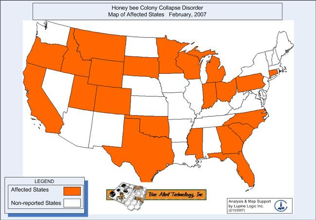 The US states affected by colony collapse