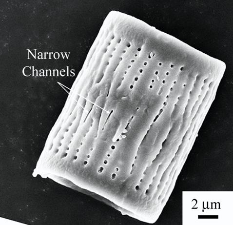 A silicon dioxide-based shell of an Aulacoseira diatom