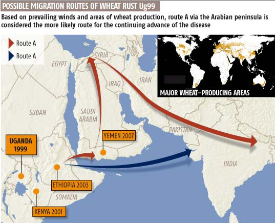 Possible migration routes of wheat rust Ug99