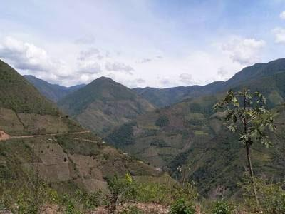 The Serrania del Pinche is shrinking dramatically due to the spread of coca farming and slash-and-burn agriculture