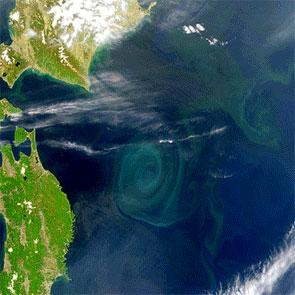 Ocean plankton blooms appear as green patches in the blue of the oceans. Some say they could be used to soak up human CO2 emissions (Images: SeaWiFS Project/NASA and GeoEYE)