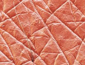 Human skin to replace animal tests