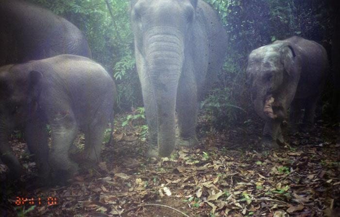 The team was encouraged to see elephant families roaming the area