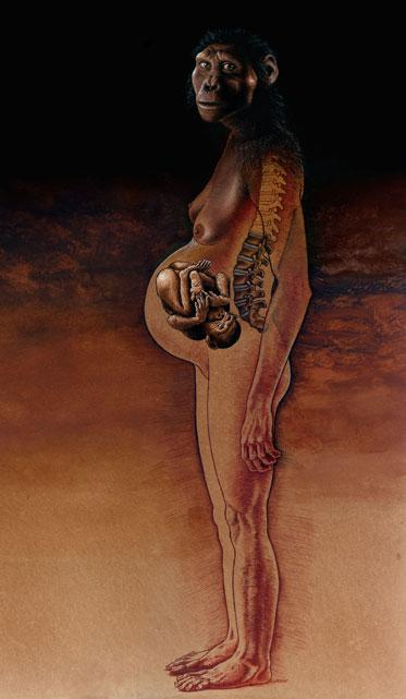Image showing a pregnant australopithecine in bipedal posture with visible fetal load and maternal vertebrae.