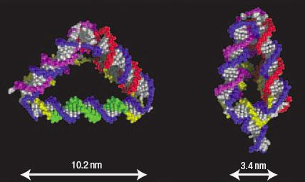 Tetrahedrons of DNA can change shape in response to further