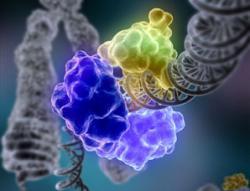 Rare gene defects might add up to schizophrenia