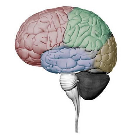 Compare a human brain...