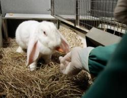 Lab animal carers suffer in silence