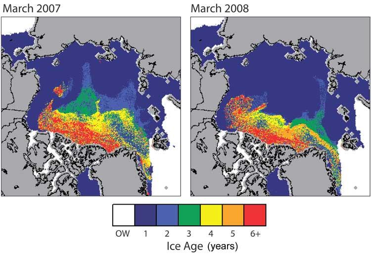 Most 2008 Arctic ice is young and therefore thin; white indicates open water
