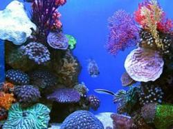 Ocean biodiversity: Depths of ignorance