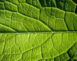 'Self-digesting' biofuel plants could ease food crisis