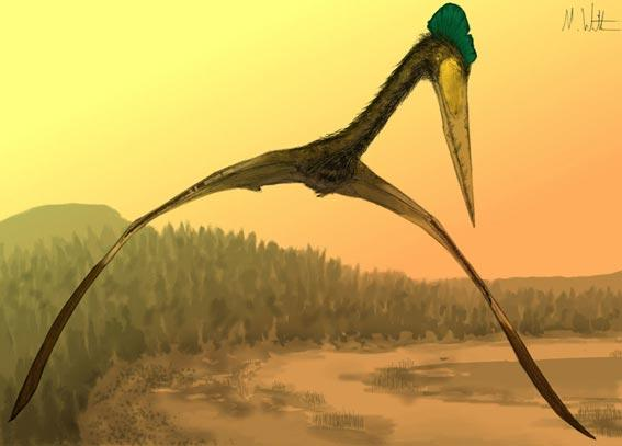 Ever wondered what a giant azhdarchid would look like flying towards you? Now you know.