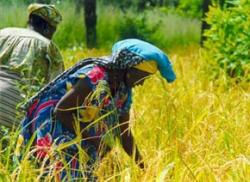 Women farmers face eviction in biofuels boom