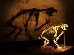 Sabre-toothed 'bear' terrorised early humans