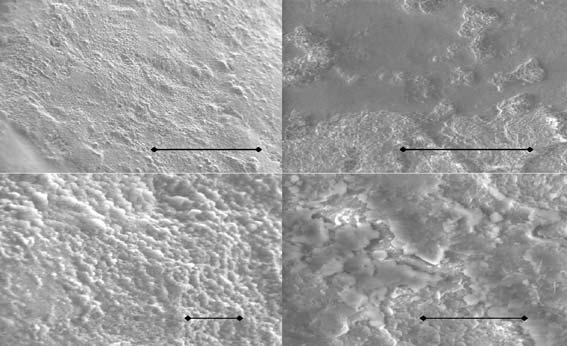Scanning electron microscope images show the roughness of mint Mentos (top and bottom left) and fruit Mentos (top and bottom right), the scale bars representing lengths from 20 to 200 micrometres