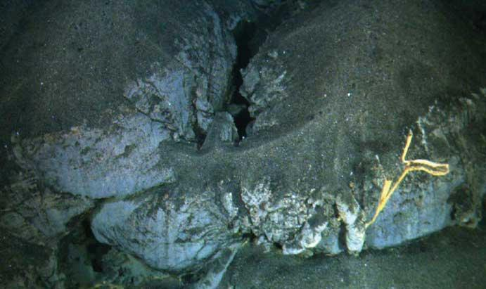 A robotic sub captured this image of an older pillow-shaped feature – formed when magma cooled in water – covered with recent debris that indicates an explosive eruption. In the foreground is the skeleton of a sponge