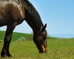 Could killer horse virus spread amongst humans?