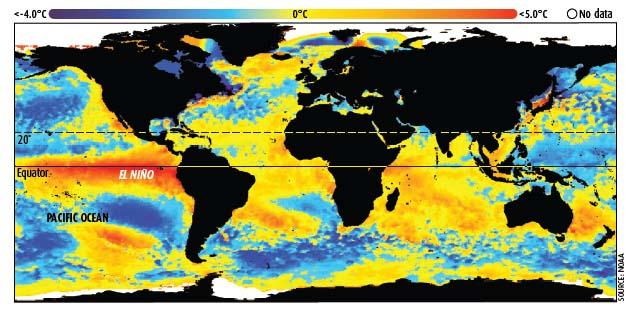 Satellite imagery of sea surface temperatures taken during January 1998 shows the strong El Nino that helped make it one of the hottest years on record.
